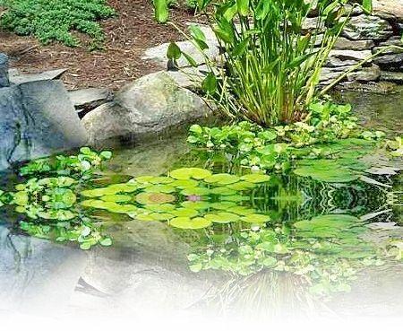 Φυτά που βοηθάνε στην εύρεση νερού