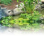 Φυτά που δείχνουν ύπαρξη  νερού